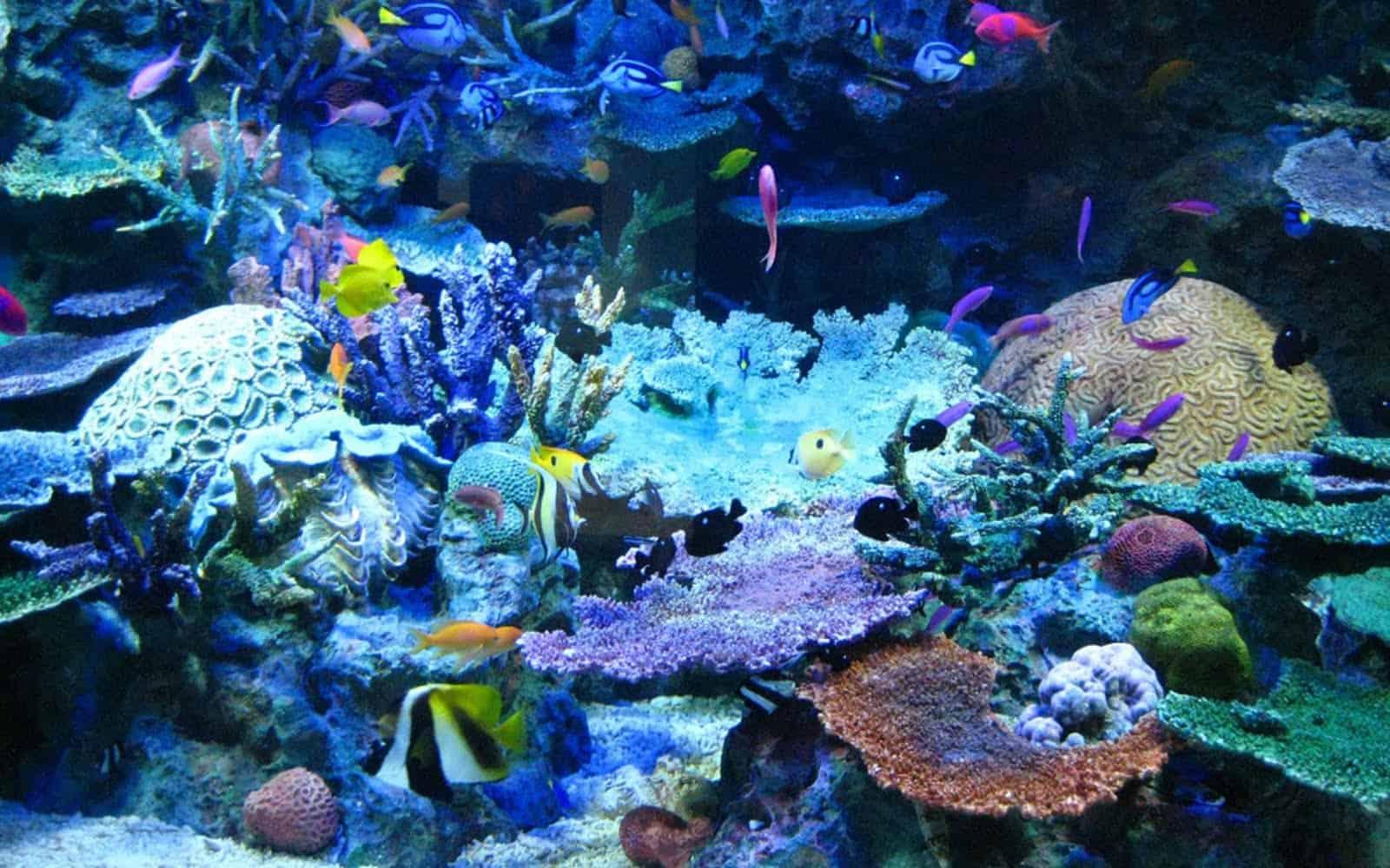 5-Coral-Reef-Fish