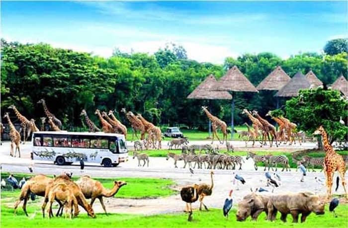 vinpearl-safari-phu-quoc xanh