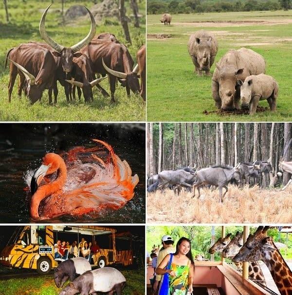 du-lich-safari-phu-quoc-1