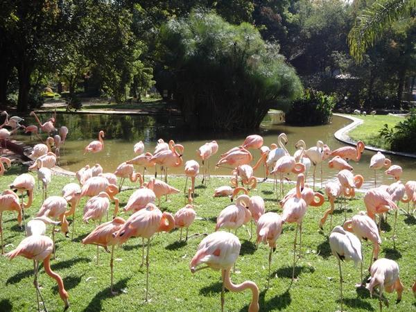 Vườn-bách-thú-tại-Phú-Quốc-lớn-thứ-2-thế-giới-được-Vingroup-đầu-tư-sẽ-hoàn-thành-vào-cuối-năm-nay
