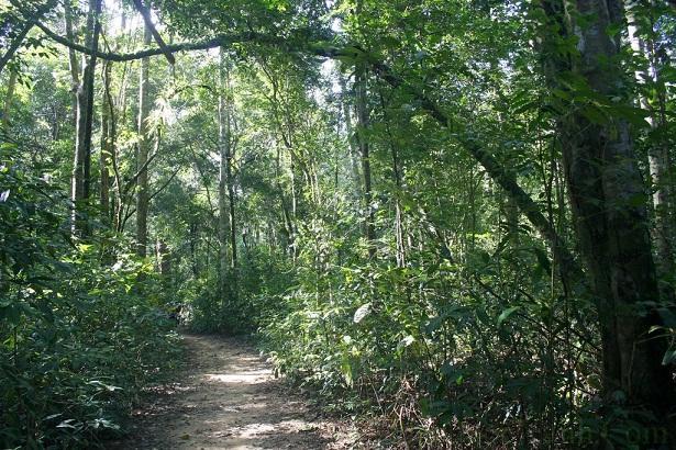 Bên trong khu rừng nguyên sinh phú quốc có hệ sinh thái phong phú