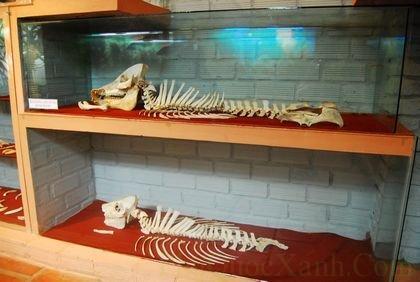 Bộ xương của một loài cá