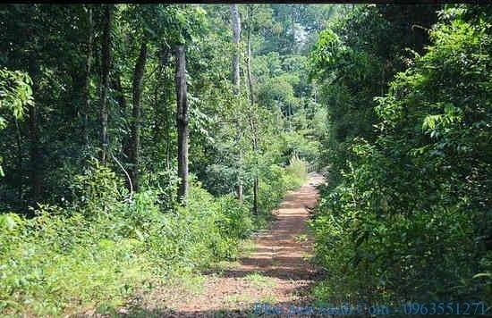 rừng nguyên sinh Phú Quốc
