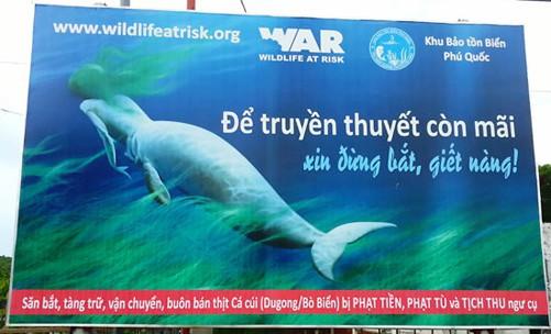 Chung tay bảo vệ bò biển