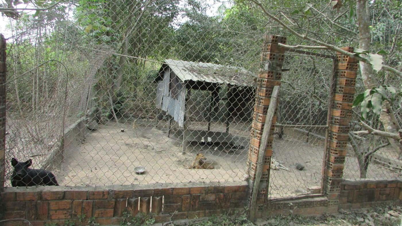 Những hang chó được đào sâu hoắm