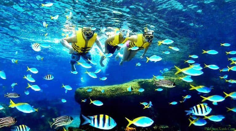 Kết quả hình ảnh cho lặn ngắm san hô ở phú quốc