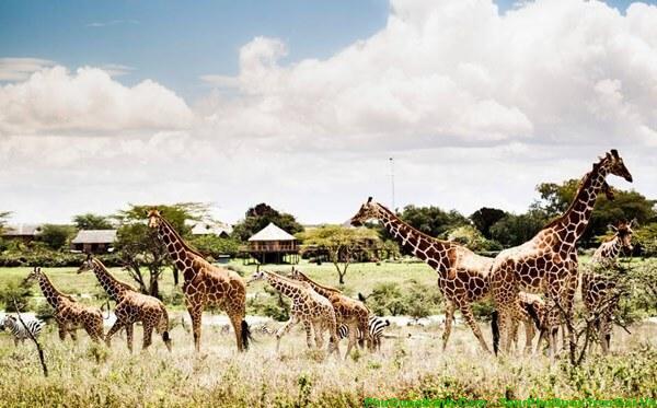safari-phu-quoc