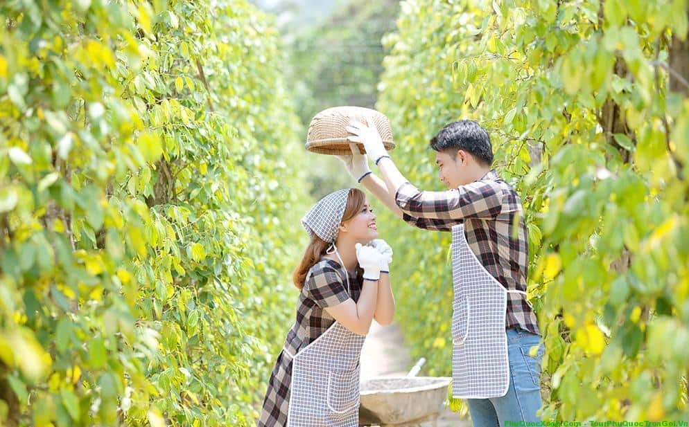 Kết quả hình ảnh cho Chụp hình cưới vườn tiêu Phú Quốc